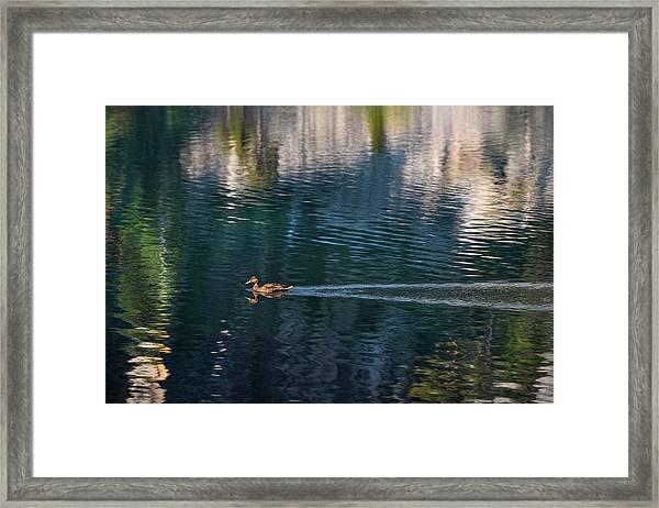 Duck Waves Framed Print