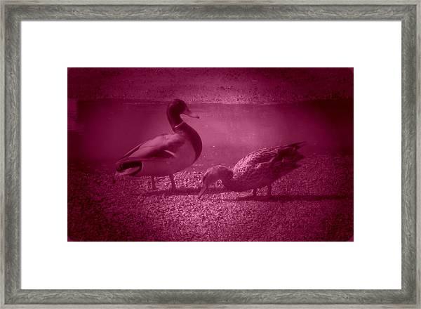 Ducks #1 Framed Print