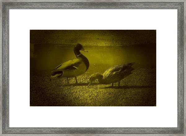 Ducks #3 Framed Print