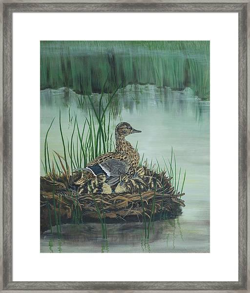 Ducks In Lifting Fog Framed Print