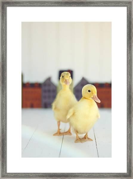 Ducks In The Neighborhood Framed Print