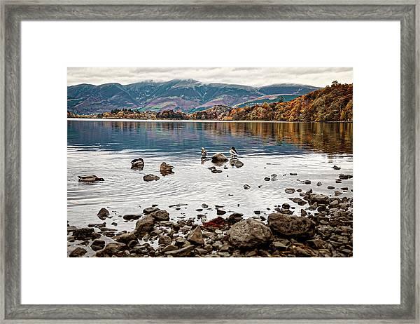 Ducks On Derwent Framed Print