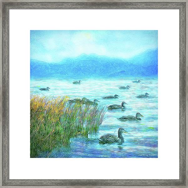 Ducks On Misty Morn - Lake In Boulder County Colorado Framed Print