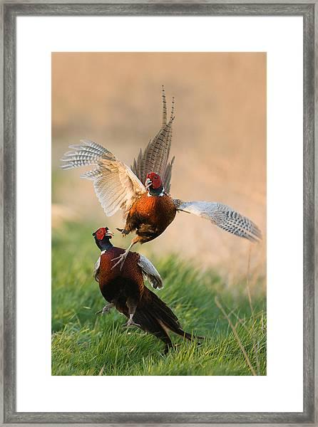 Duel Framed Print