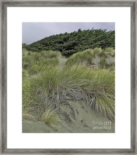 Bodega Dunes #3 Framed Print