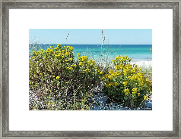 Dunetop Wildflowers By The Beach Framed Print