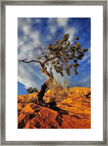 Framed Print featuring the photograph Dusk Dance by Skip Hunt