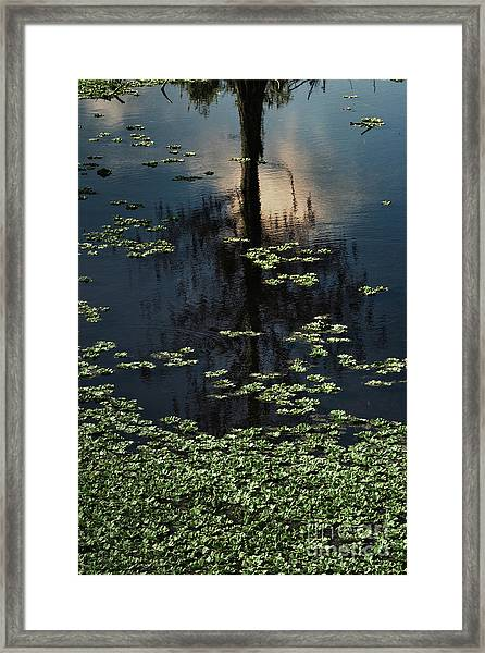 Dusk In The Swamp Framed Print