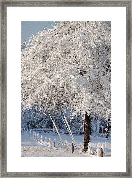 Dusted With Powdered Sugar Framed Print
