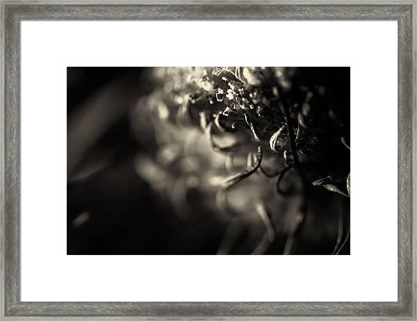 Faded Chrysanthemum Flower Abstract Print Framed Print