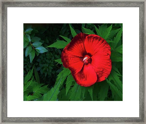 Dynamic Red Framed Print