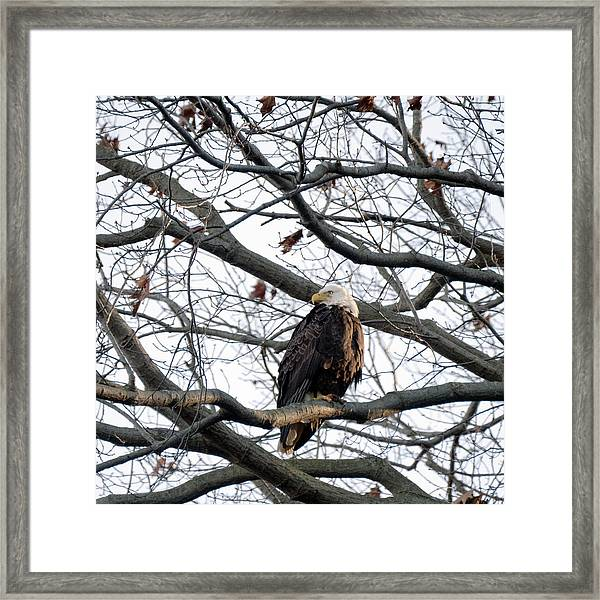 Eagel 0 Framed Print