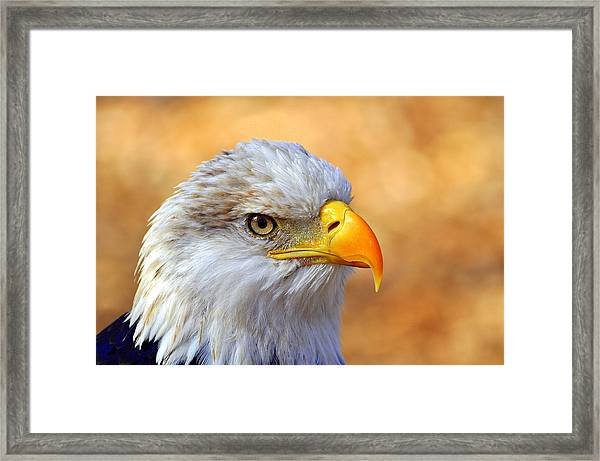 Eagle 7 Framed Print