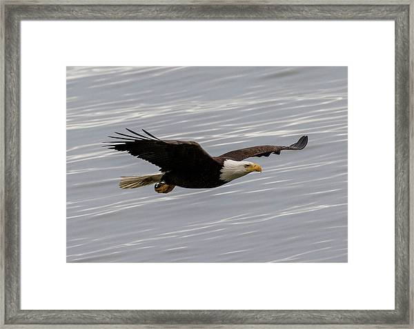 Eagle And The Sea Framed Print