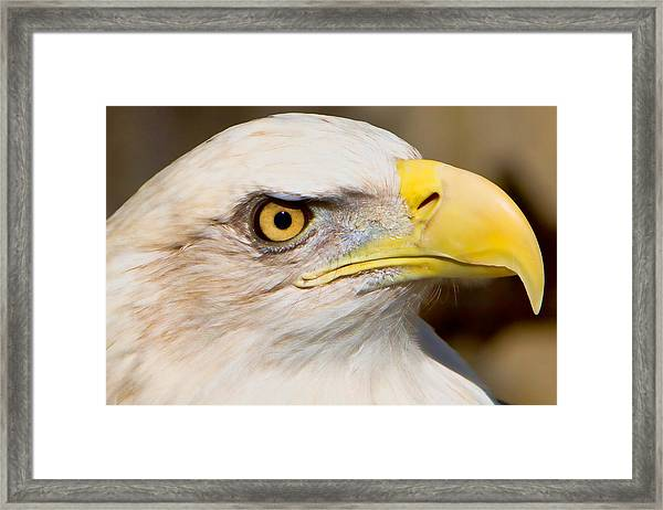 Framed Print featuring the photograph Eagle Eye by William Jobes
