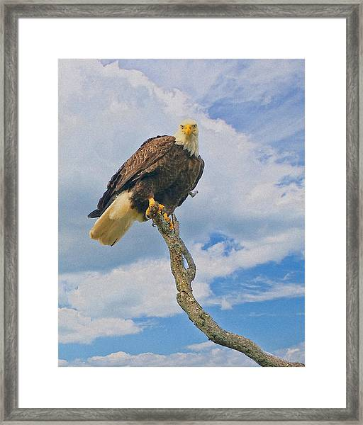 Framed Print featuring the photograph Eagle Eyes by William Jobes