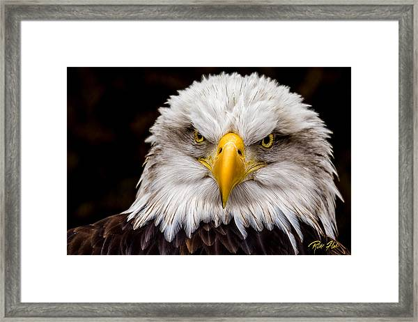 Defiant And Resolute - Bald Eagle Framed Print