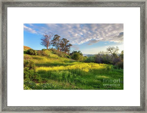 Eagle Grove At Lake Casitas In Ventura County, California Framed Print