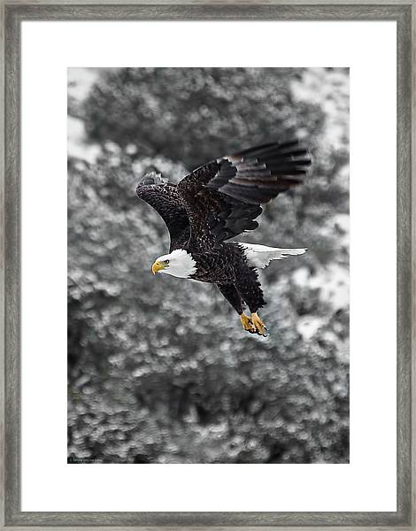 Framed Print featuring the photograph Eagle In Flight by Britt Runyon