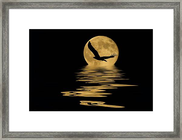 Eagle In The Moonlight Framed Print
