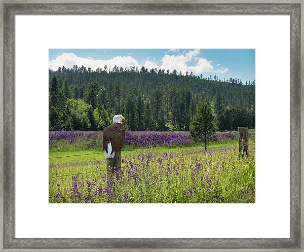 Framed Print featuring the photograph Eagle On Fence Post by Patti Deters