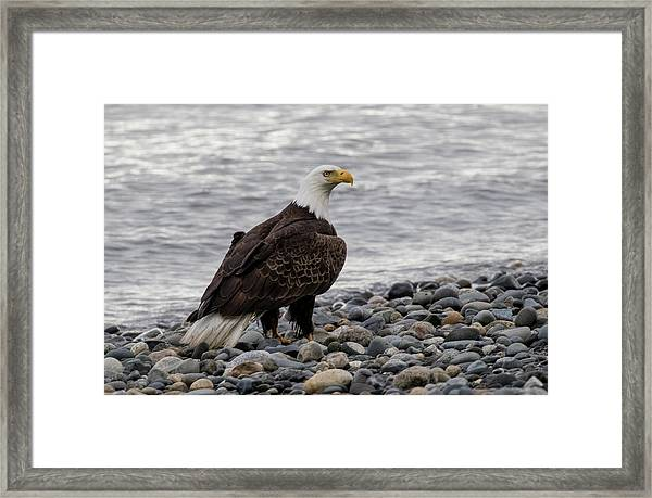Eagle On The Rocks Framed Print
