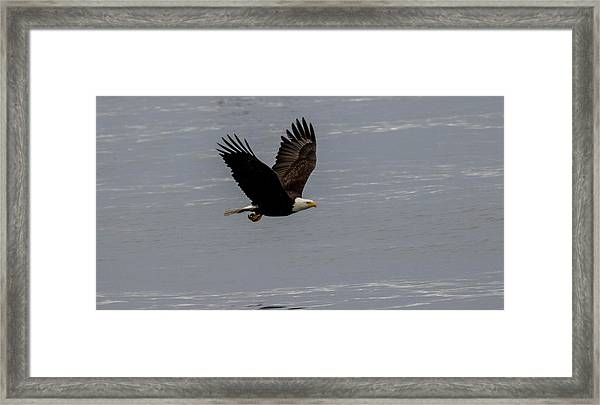 Eagle Over The Ocean Framed Print