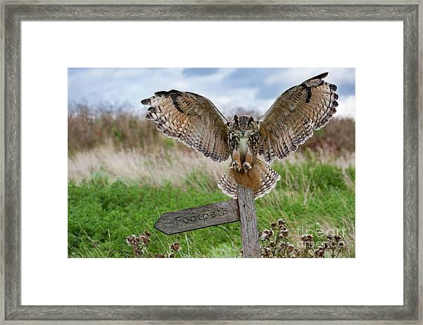 Eagle Owl On Signpost Framed Print