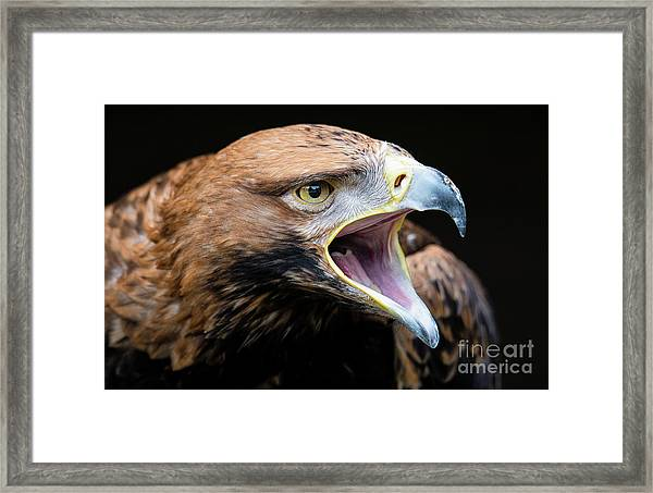 Eagle Power Framed Print