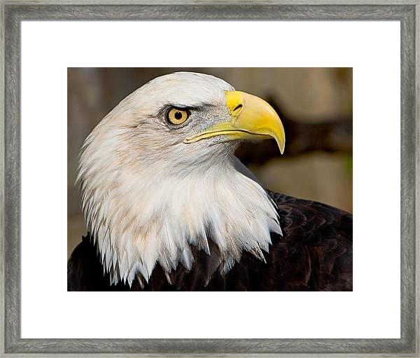 Framed Print featuring the photograph Eagle Power by William Jobes