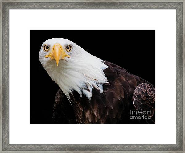 Eagle Stare Framed Print