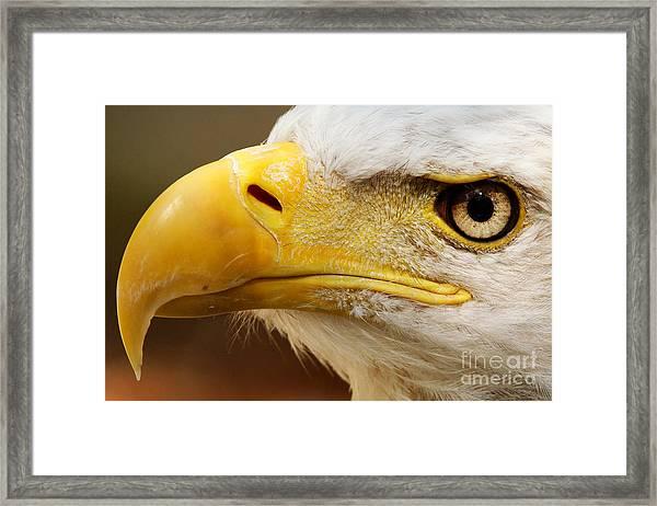 Eagles Eyes Framed Print