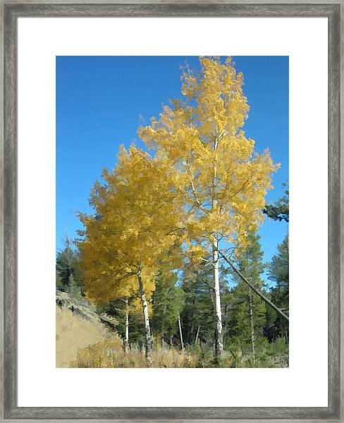 Early Autumn Aspens Framed Print
