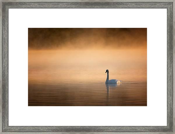 Early Bird 2015 Framed Print
