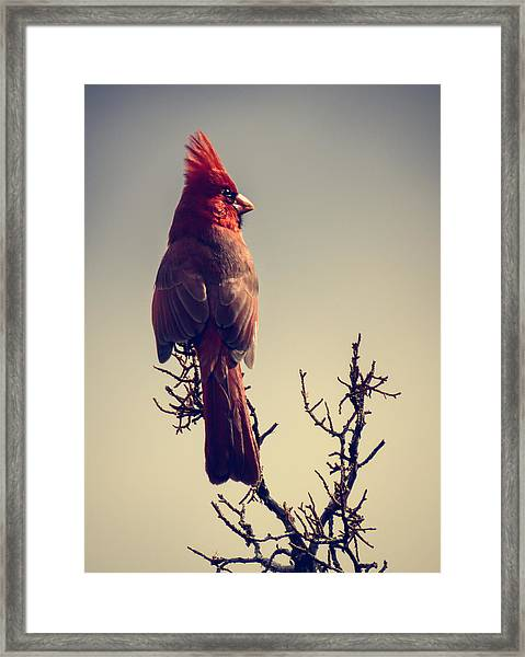 Early Evening Sentinel Framed Print