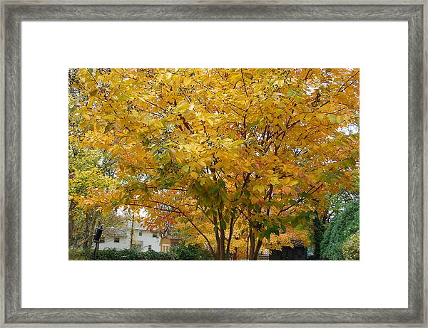 Early Fall Framed Print by Gregory Smith