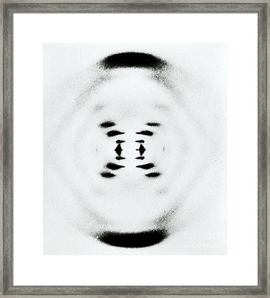 Early Image Of Dna Framed Print