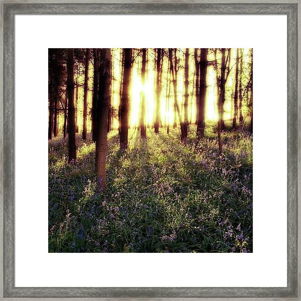 Early Morning Amongst The Framed Print