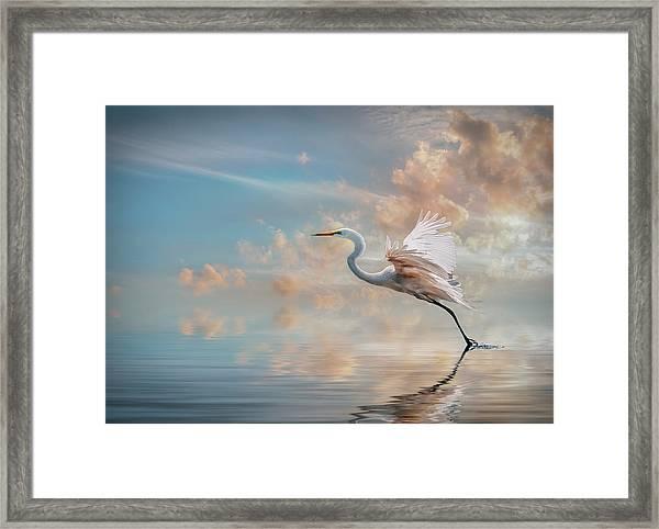 Early Morning Egret Framed Print