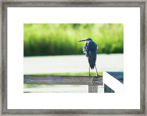 Early Morning Great Blue Heron Framed Print