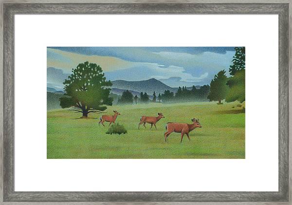 Early Spring Evergreen Framed Print