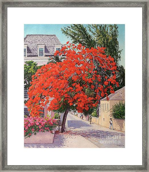 East And Shirley Street Framed Print