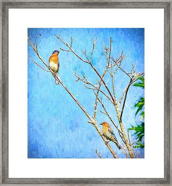 Eastern Bluebird Couple Framed Print