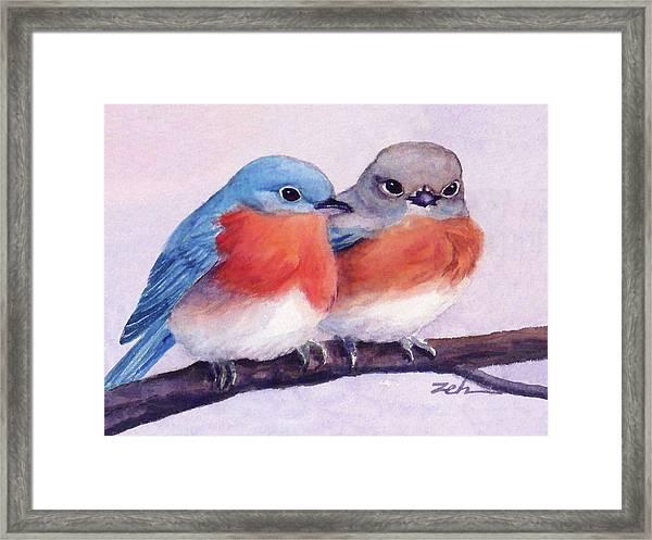 Eastern Bluebirds Framed Print