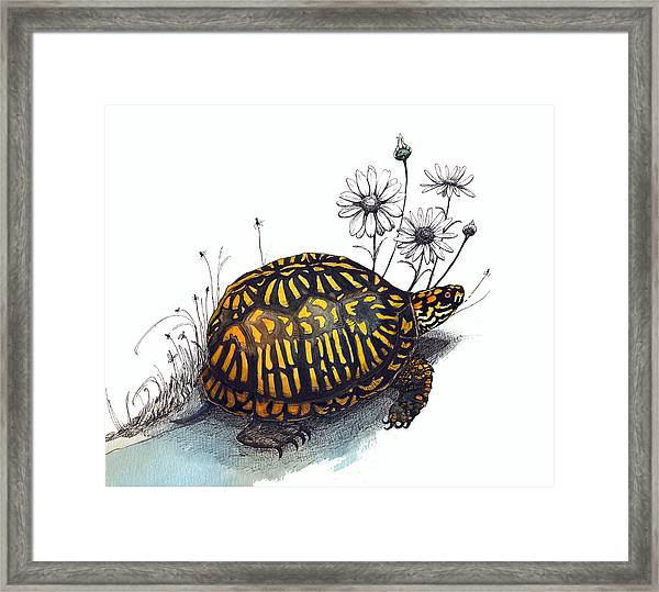 Eastern Box Turtle Framed Print