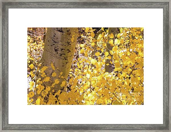 Eastern Sierras  Framed Print