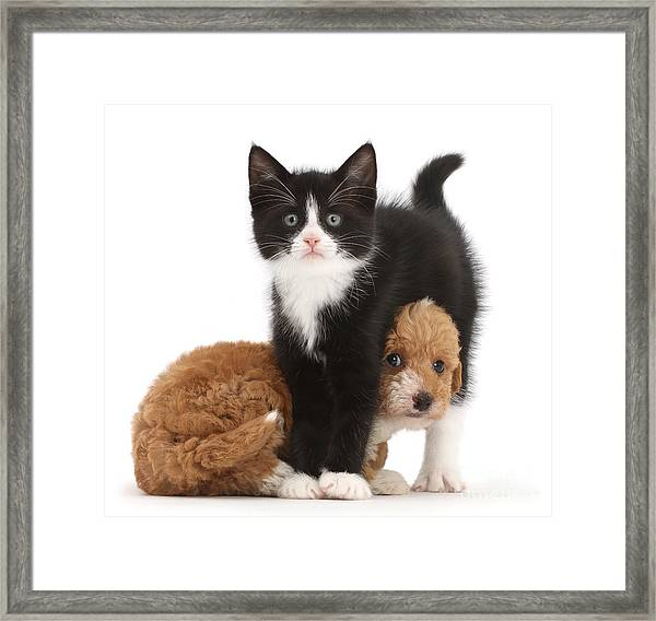 Easy To See Which One Of Us Is The Boss Framed Print