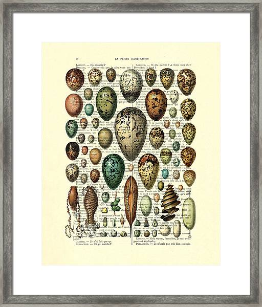 Eggs Collection Framed Print