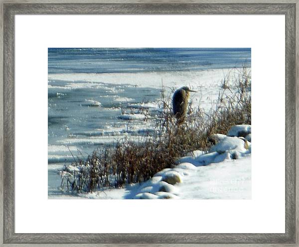 Egret Frozen Lake Framed Print