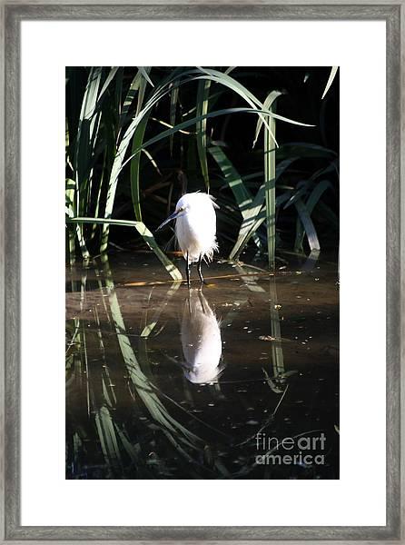 Egret In Reed Framed Print